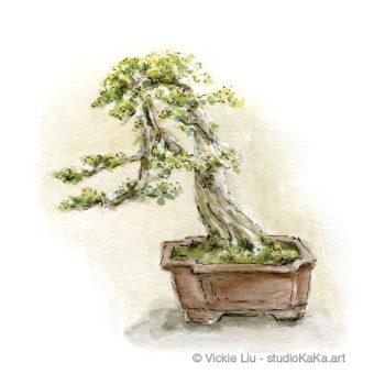 Bonsai Plant Art Print