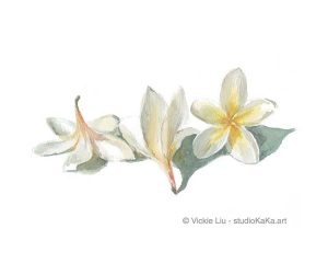 Frangipani Watercolour Art