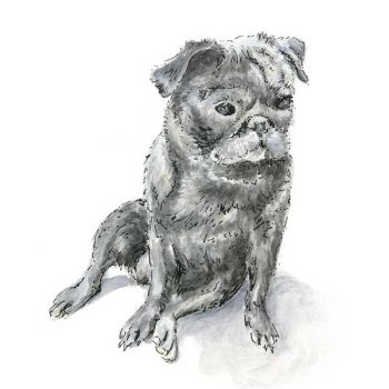 Black Pug Artwork