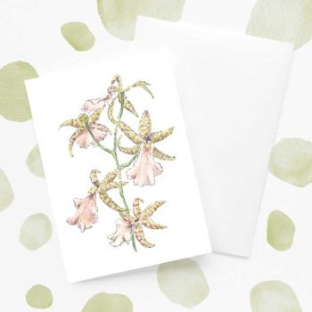 Pink and Green Orchid Flower Card