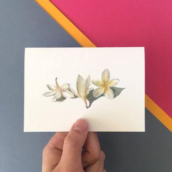 frangipani flower card