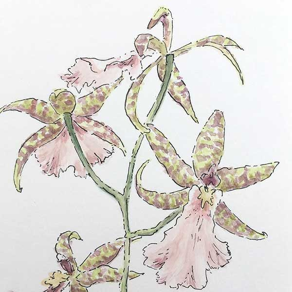 Pink Orchid Watercolour Painting