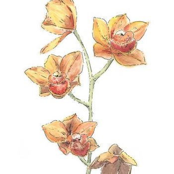 orange orchid original watercolour painting
