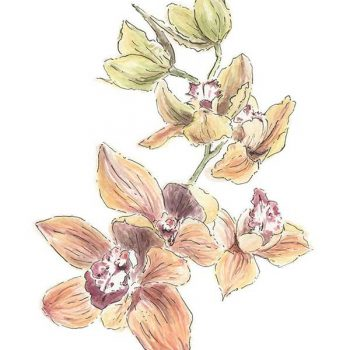 orange orchid original watercolour