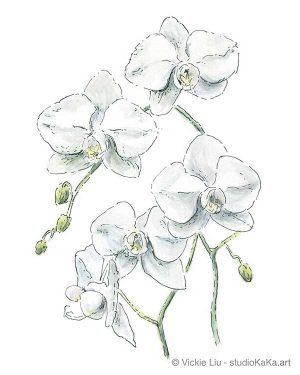 white orchid original watercolour