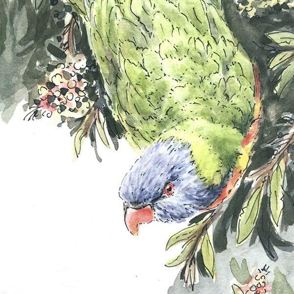 Australian bird Watercolour