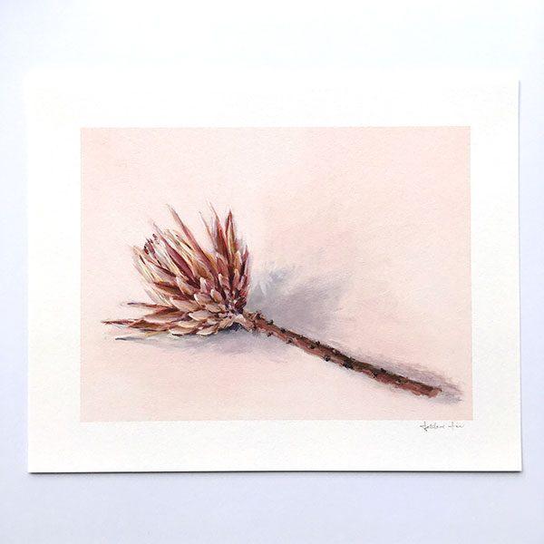 Australian flower print