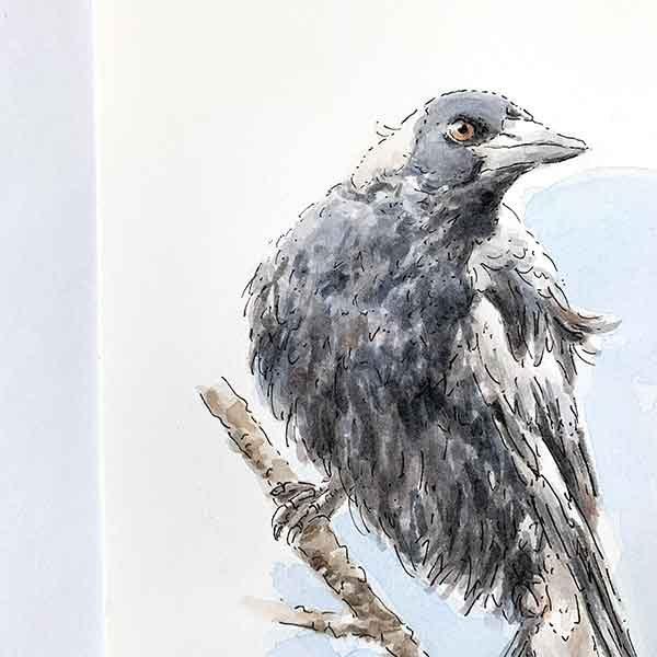 Australian Magpie Watercolour Painting Detail