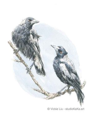 Magpie Australian Bird Original Watercolour Painting