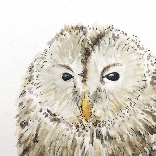 owl watercolour detail