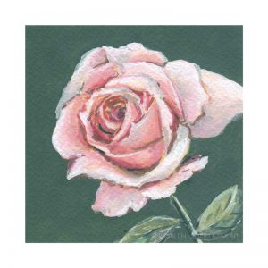 Light Pink Rose Pink No.1