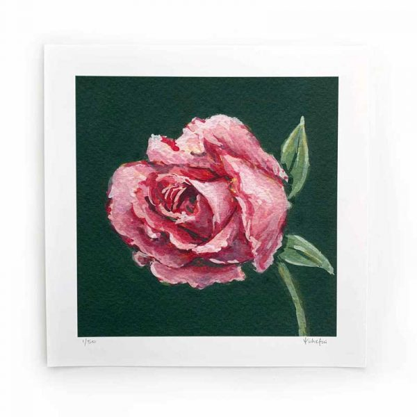 magenta rose limited edition print