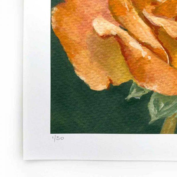 orange rose limited edition print detail
