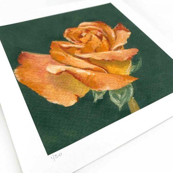 orange rose painting giclee print