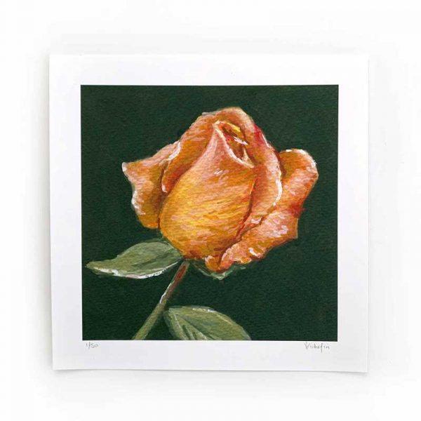 orange rose limited edition print