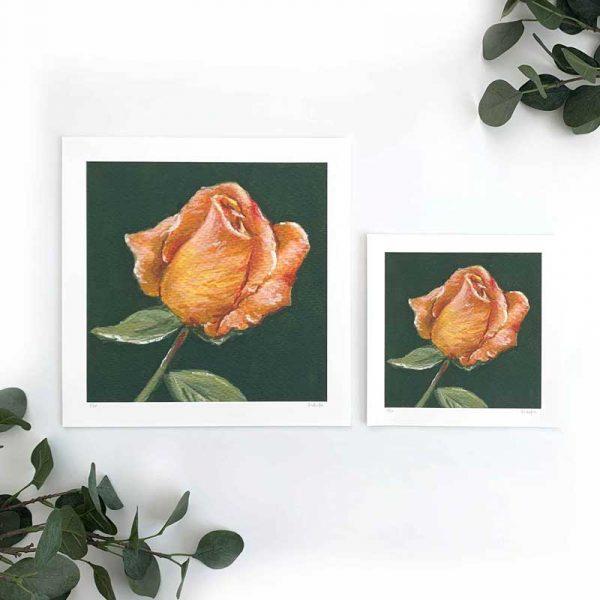 Orange Rose Art Print Sizes