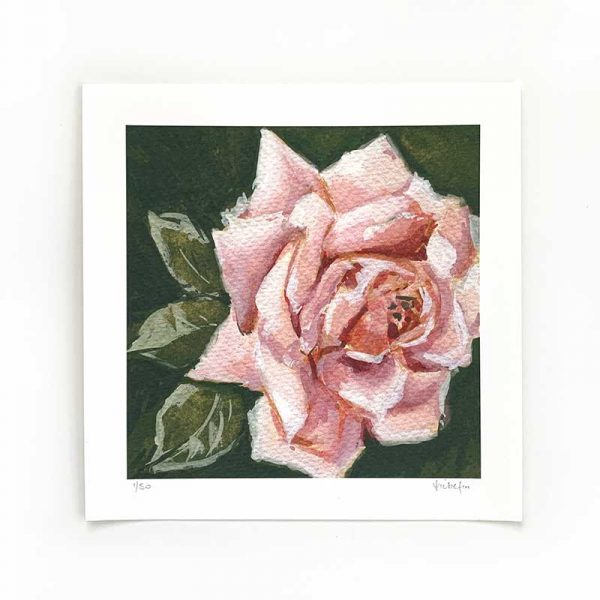 Pale Pink Rose Limited Edition Print
