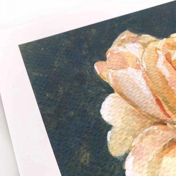 peach rose giclee print