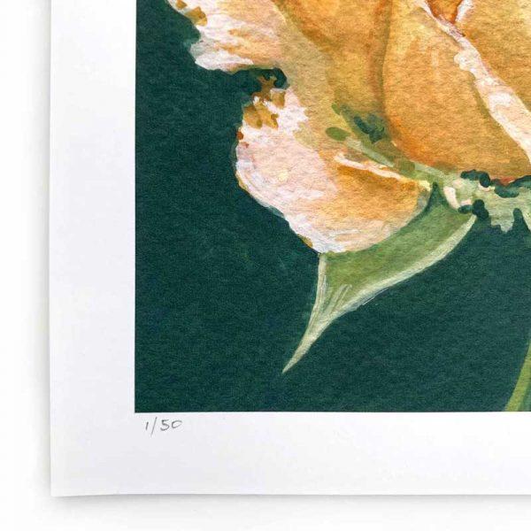 peach rose limited edition print detail