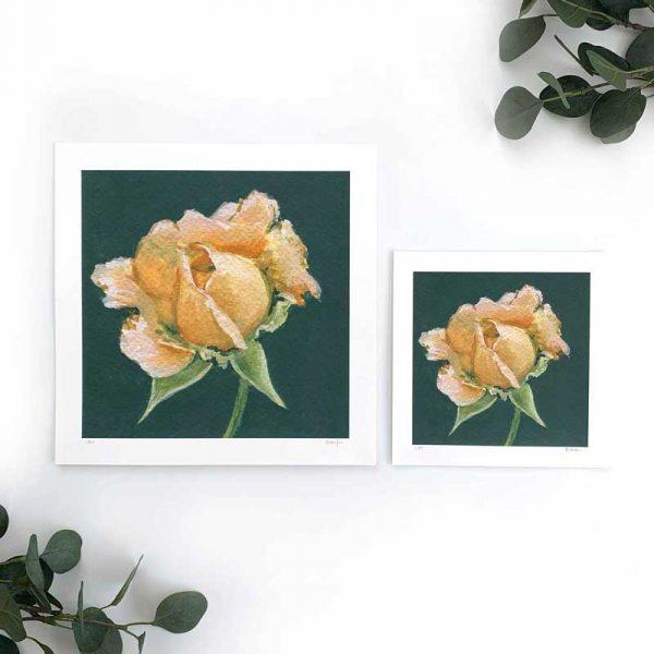 Peach rose art print sizes