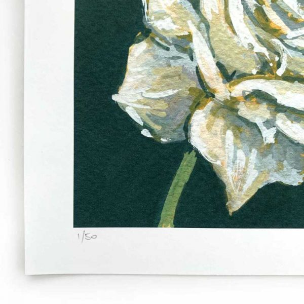 white rose limited edition print detail