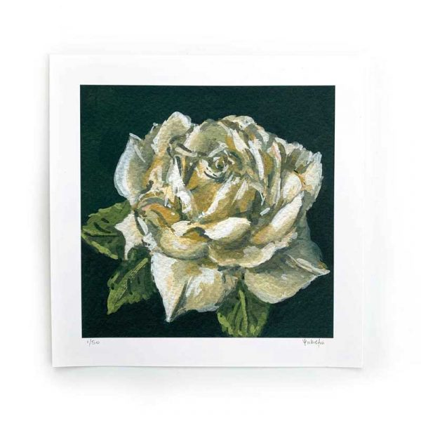 white rose limited edition print