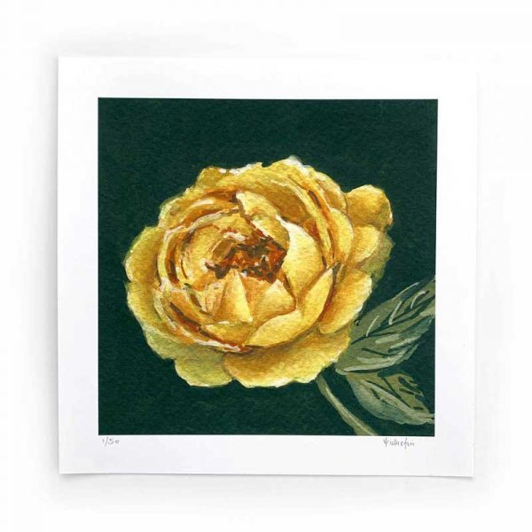 yellow rose limited edition print