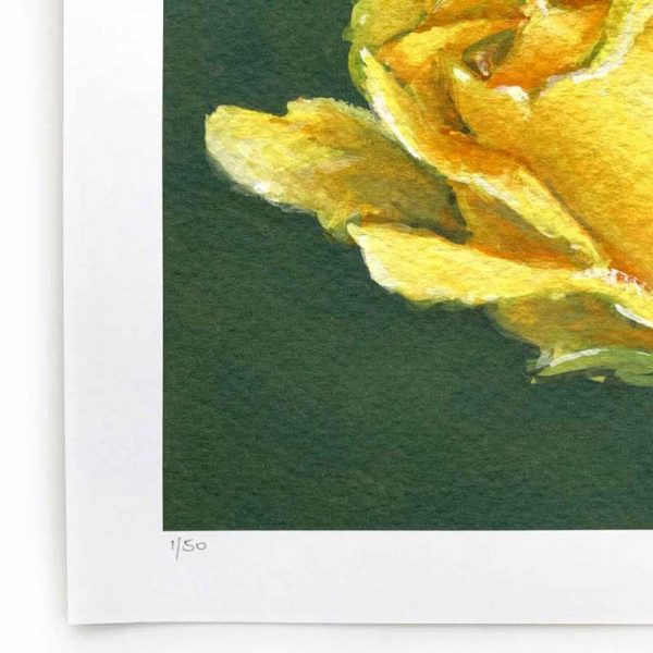 yellow rose limited edition print detail
