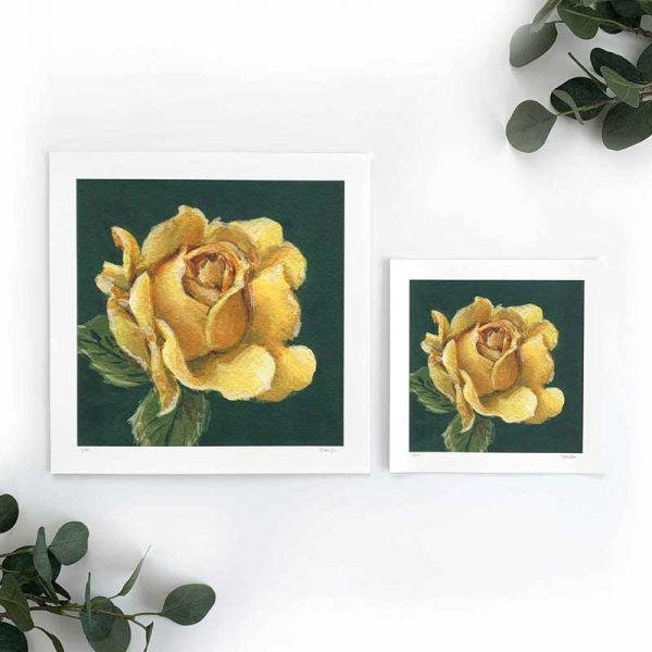 Yellow Rose Art Print Sizes