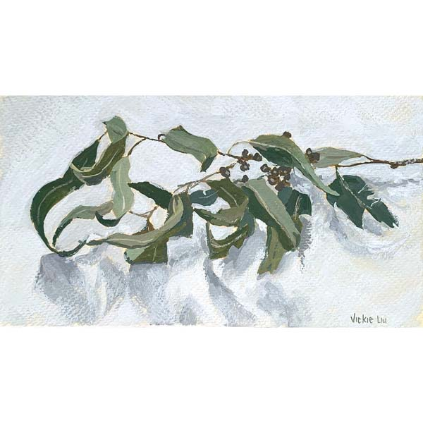 Curly Gum Leaves Study