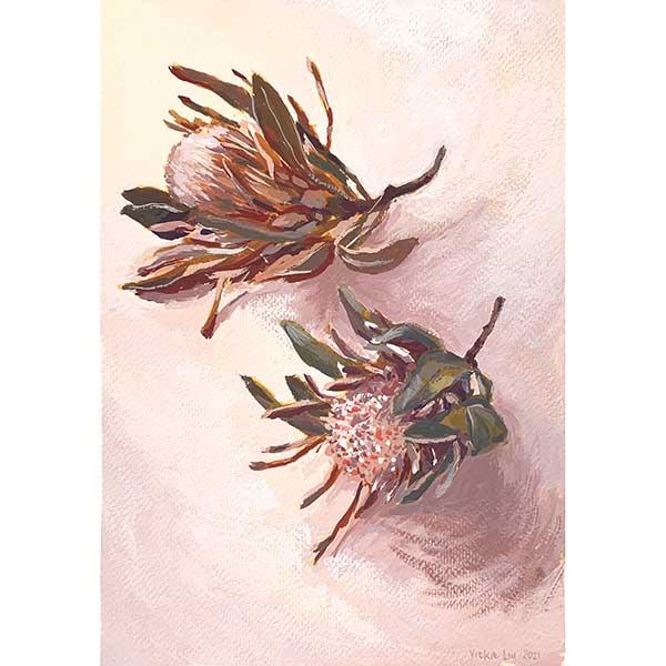 Two dried proteas study